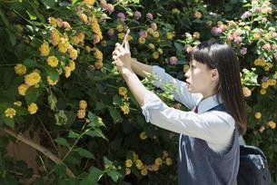 女子高生 花の写真素材 [FYI01224712]