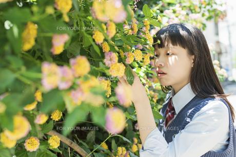 女子高生 花の写真素材 [FYI01224714]