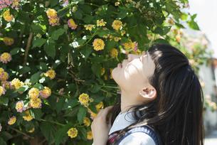 女子高生 花の写真素材 [FYI01224722]