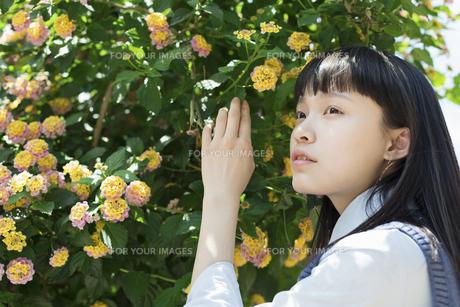 女子高生 花の写真素材 [FYI01224725]