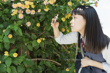 女子高生 花の写真素材 [FYI01224729]
