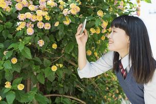 女子高生 花の写真素材 [FYI01224731]