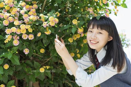 女子高生 花の写真素材 [FYI01224733]