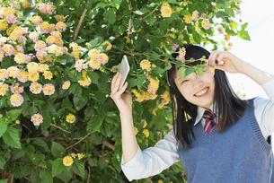 女子高生 花の写真素材 [FYI01224734]