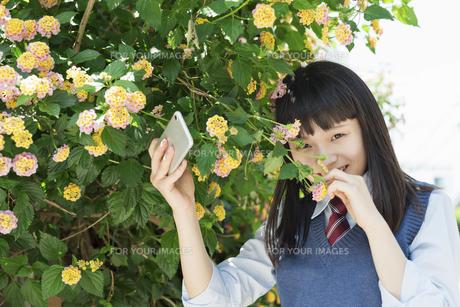 女子高生 花の写真素材 [FYI01224735]