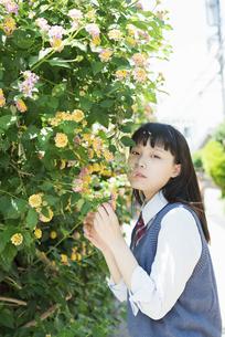女子高生 花の写真素材 [FYI01224739]