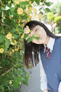 女子高生 花の写真素材 [FYI01224740]