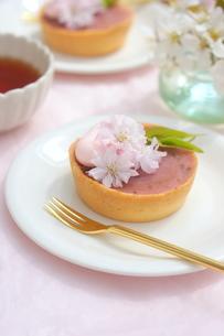 桜あんのタルトの写真素材 [FYI01224821]