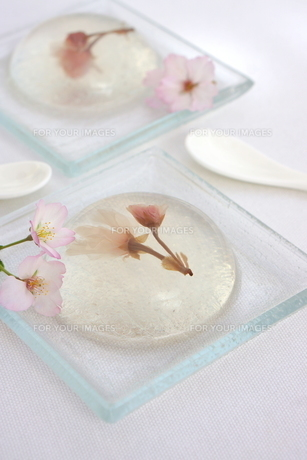 プルルーン桜ゼリーの写真素材 [FYI01224851]