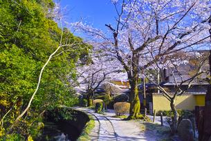 春の京都、満開の桜咲く哲学の道からみた景色の写真素材 [FYI01224889]