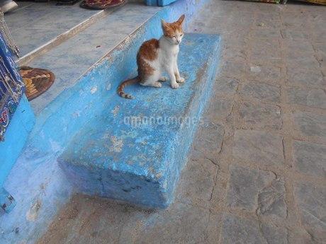 シャウエンの猫の写真素材 [FYI01224899]