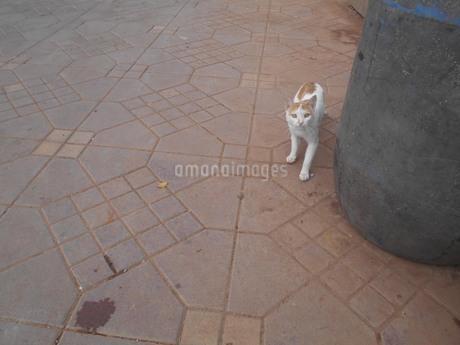 マラケシュの猫の写真素材 [FYI01224930]