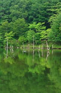 池に映る緑の写真素材 [FYI01224973]