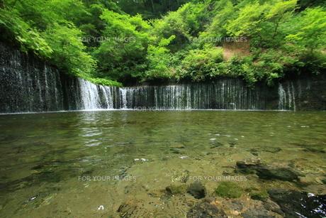 長野県白糸の滝の写真素材 [FYI01224993]