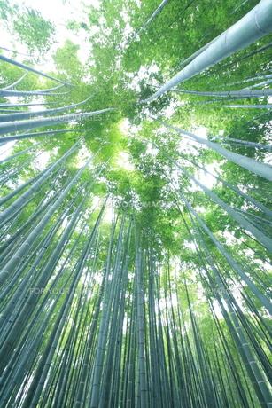 鎌倉報国寺の竹林の写真素材 [FYI01225007]