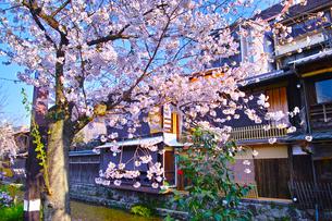 春の京都、満開の桜咲く祇園白川の風景の写真素材 [FYI01225141]