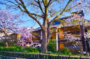 春の京都、満開の桜咲く祇園白川の風景の写真素材 [FYI01225142]