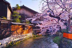 春の京都、満開の桜咲く祇園白川の風景の写真素材 [FYI01225144]