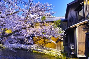 春の京都、満開の桜咲く祇園白川の風景の写真素材 [FYI01225146]