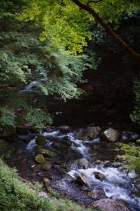 赤目四十八滝の写真素材 [FYI01225149]
