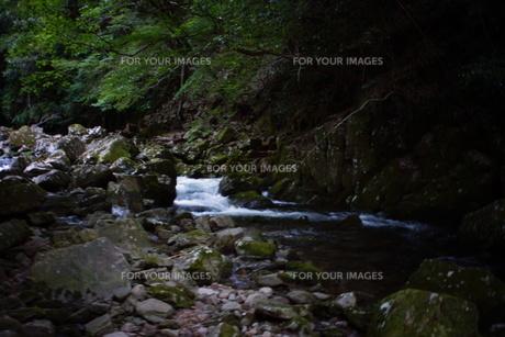 赤目四十八滝の写真素材 [FYI01225159]