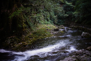 赤目四十八滝の写真素材 [FYI01225168]