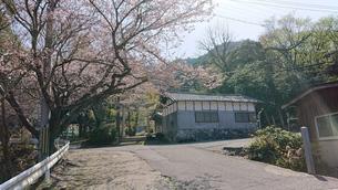春の田舎の神社の鳥居へと続く道の写真素材 [FYI01225199]