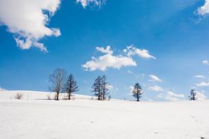 早春の雪原と青空 美瑛町の写真素材 [FYI01225274]