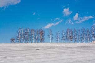 融雪剤が撒かれた雪の畑と青空 美瑛町の写真素材 [FYI01225275]