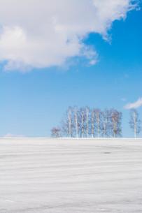 融雪剤が撒かれた雪の畑と青空 美瑛町の写真素材 [FYI01225276]