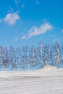 融雪剤が撒かれた雪の畑と青空 美瑛町の写真素材 [FYI01225277]
