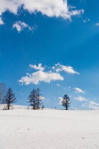早春の雪原と青空 美瑛町の写真素材 [FYI01225292]