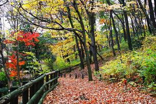 自然公園の明るい雑木林の紅葉の写真素材 [FYI01225690]