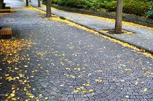 銀杏の落ち葉が散る石畳の歩道の写真素材 [FYI01225767]