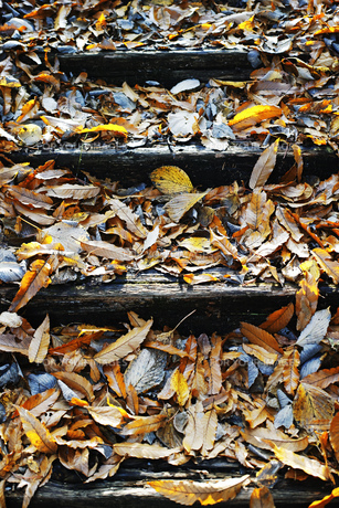 落ち葉が溜まった木の階段の写真素材 [FYI01225813]