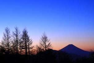 夜明けの富士山と木々の写真素材 [FYI01225902]