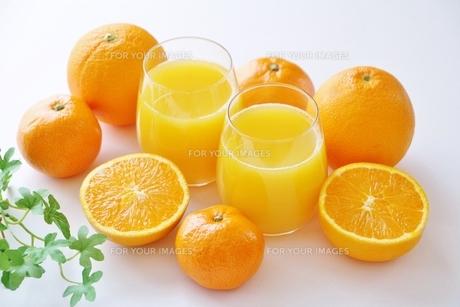 オレンジジュースとオレンジの写真素材 [FYI01226399]