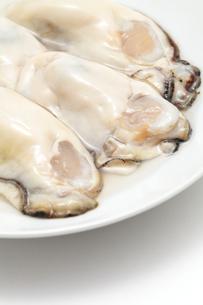 生牡蛎のアップの写真素材 [FYI01226544]