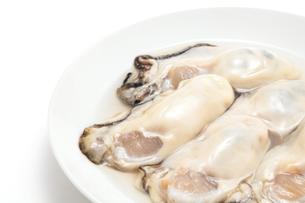 生牡蛎のアップの写真素材 [FYI01226546]
