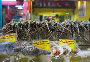 バンコクの中華街で販売されているロブスターの写真素材 [FYI01226560]