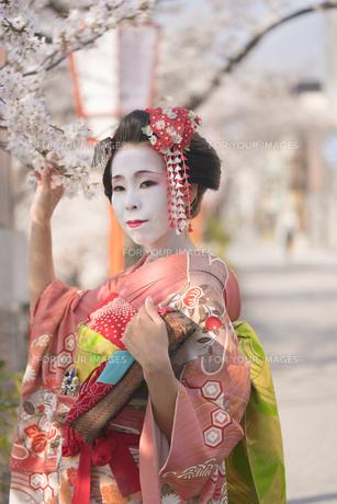 桜の木の下にある祇園町の通りを背景に赤い着物を着た日本の可愛い芸者あるいは舞子が花を眺めてる姿の写真素材 [FYI01226791]