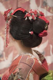 伝統的な模様の着物の前でオレンジ色の着物姿の若い舞子さんの桂の後ろ姿に飾りや簪が赤くて魅力的ですの写真素材 [FYI01226821]