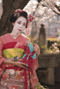 桜の木の下にある祇園町の通りを背景に赤い着物を着た日本の可愛い芸者あるいは舞子が花を眺めてる姿の写真素材 [FYI01226827]