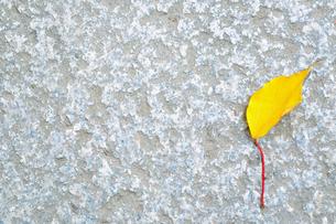石畳の上の紅葉した落ち葉の写真素材 [FYI01226850]