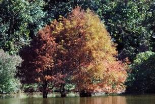 初冬の紅葉の写真素材 [FYI01226913]