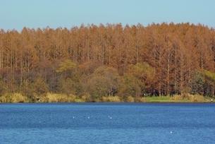 青い空と湖の写真素材 [FYI01226916]