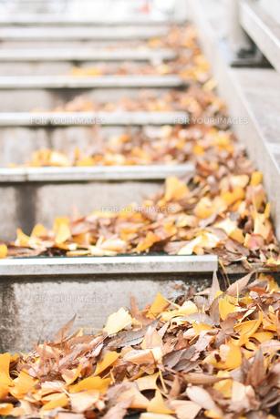 落ち葉の写真素材 [FYI01226936]