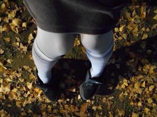 落ち葉の中に座る 膝を曲げるの写真素材 [FYI01226964]