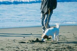 海と犬の写真素材 [FYI01227091]