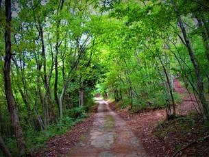 初秋の緑の写真素材 [FYI01227131]
